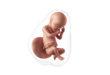 30 semanas de embarazo