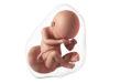 38 semanas de embarazo